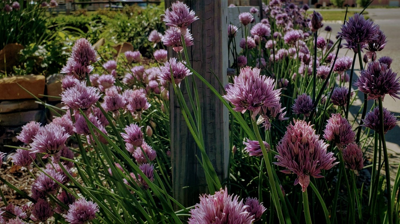 CKD Lawn & Garden Blog
